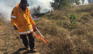 Juru trainee Matt Prior ignites along the firebreak at Kaili Wetlands