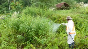 ct - Minimising the impact of weeds